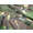 British Windproof Smock